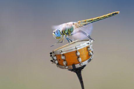 libelle met trommel