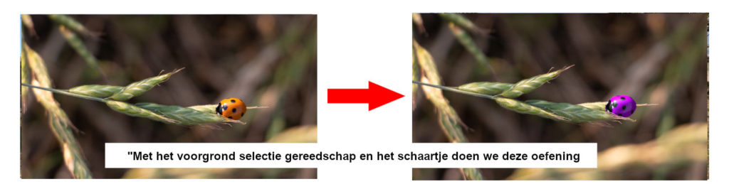 voorbeeld lieveheersbeestje