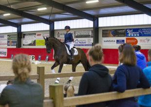 Rijden van jonge paarden