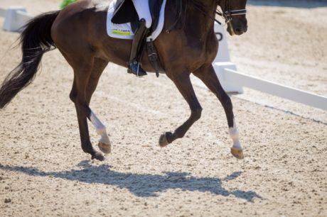 Paard aan het been