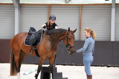 hoe leren paarden deel 3