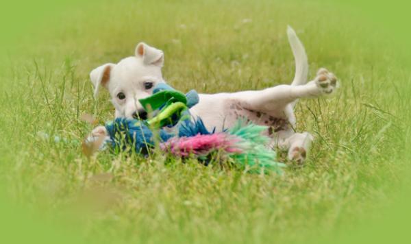 Fitness voor PuppiesFocus op lichaamsbewustzijn en teambuilding tussen pup en geleider