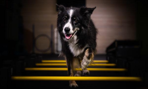 Fitness for seniorsFocus on movement and mental stimulation