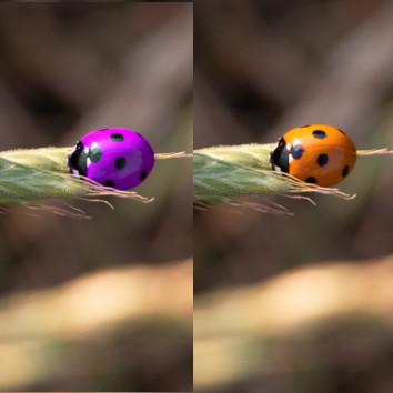 een object van kleur veranderen