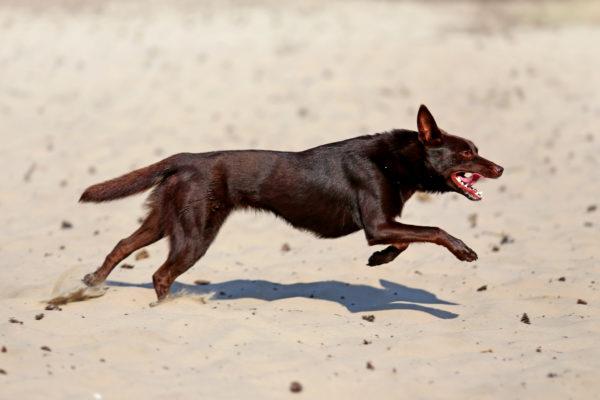 Fitness voor sporthondenFocus op kracht, lenigheid en cardio Blessurepreventie en prestatieverbetering