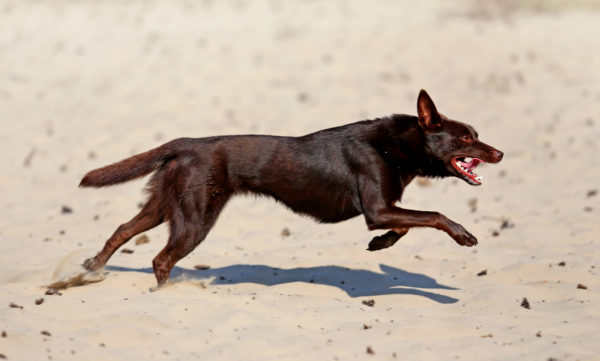 Fitness for sporting dogsFocus on power, agility and cardio Injury prevention and performance improvement